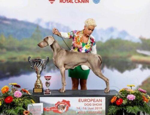 CAMPIONI D'EUROPAAA!!! EDS WELS – Havana Giovane Campione Europeo Assoluto 2019!!!