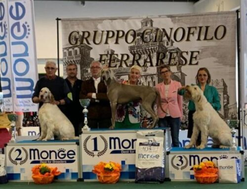 INTERNATIONAL DOG SHOW FERRARA & RADUNO WEIMARANER CLUB ITALIA 11/05/19