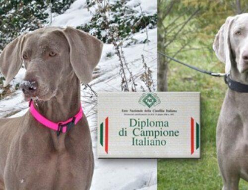 OLIMPIA E KIRA DEI GRANDI GRIGI: CAMPIONESSE ITALIANE WEIMARANER!