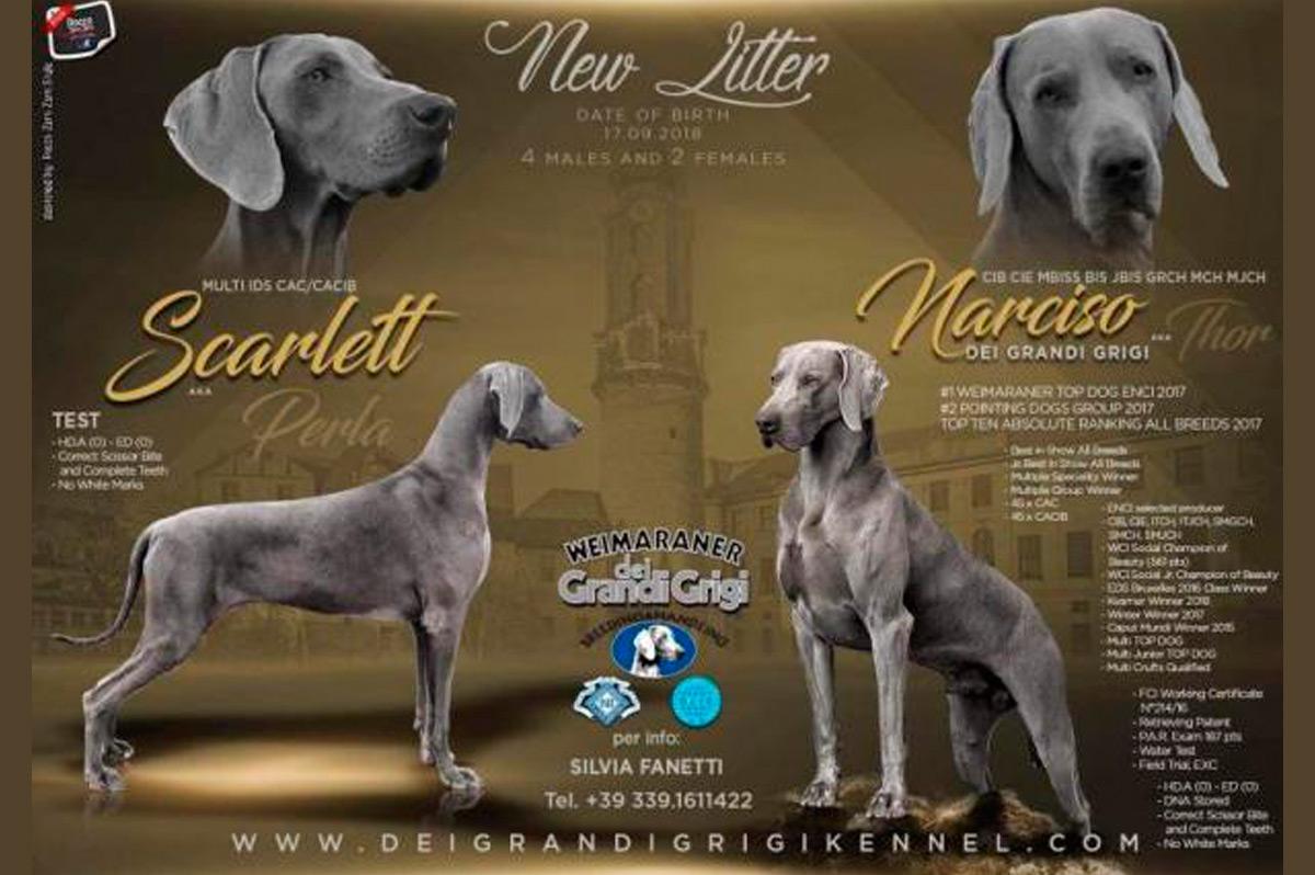 Scarlett-X-Narciso-Dei-Grandi-Grigi